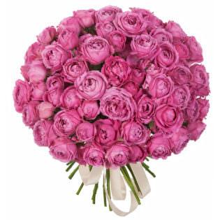 Розы Пионовидные розовые